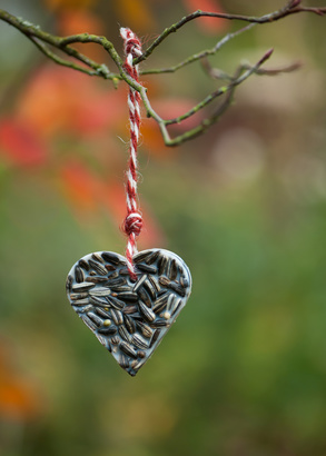 Heart shaped bird feeder hanging on the tree. Help people to animals.
